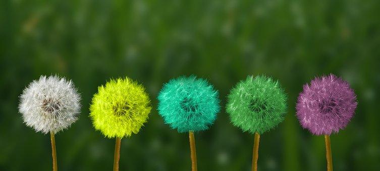 Soffioni  di più colori indicano il vivere la vita con leggerezza